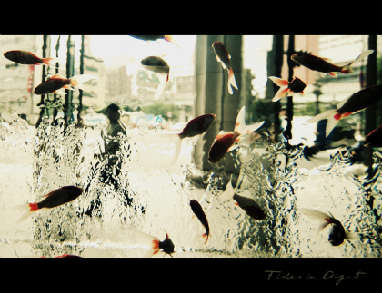 Fishes in August.jpg